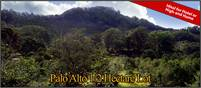 Boquete, Panama 1/2 hectare ideal for hotel or high-end home site in Exclusive Area Palo Alto