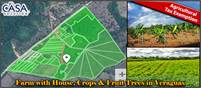 Farm with House, Crops & Fruit Trees plus a Stream for Sale in Veraguas, Panama