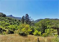 Palo Alto Retreat Property – Would be a Great Eco Lodge or Preservation Site