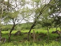 25 acres for sale in Caldera, Boquete, Panama with Full Year Stream