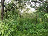 Nearly 10 acres in Caldera, Boquete for sale