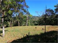 Beautiful Land of 1.4 acres with Volcan Baru View & Gorgeous Trees for Sale in Jaramillo, Boquete