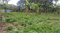 Land for sale in Palmira
