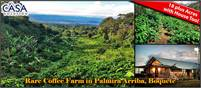 Rare Coffee Farm for Sale in Palmira Arriba, Boquete, Panama – 18 plus Acres with House Too!