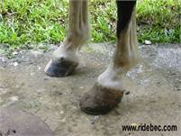 Corrective & Therapeutic Hoof Care by Jessica