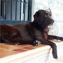 Ceiba - Canine Therapist