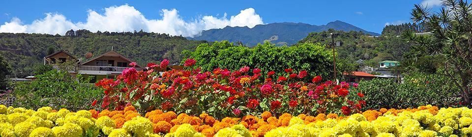 Boquete Flowers