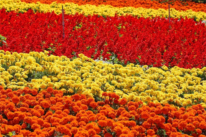 Coffee & Flower Festival