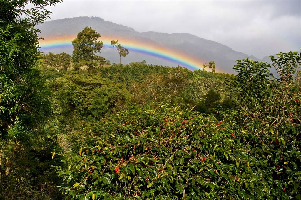 Rainbow Over Boquete
