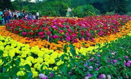 Flower & Coffee Festival